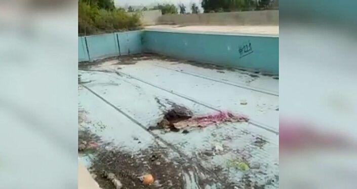 Adana'da bir köpek, bıçaklanarak öldürülmüş halde bulundu