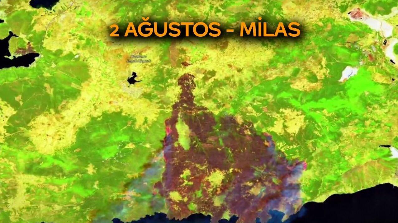 Milas'ta kaybedilen ormanlık alan